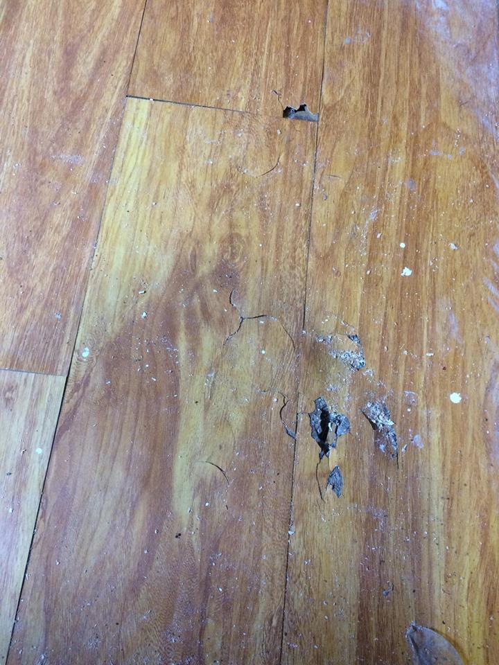 sàn bị mối mục