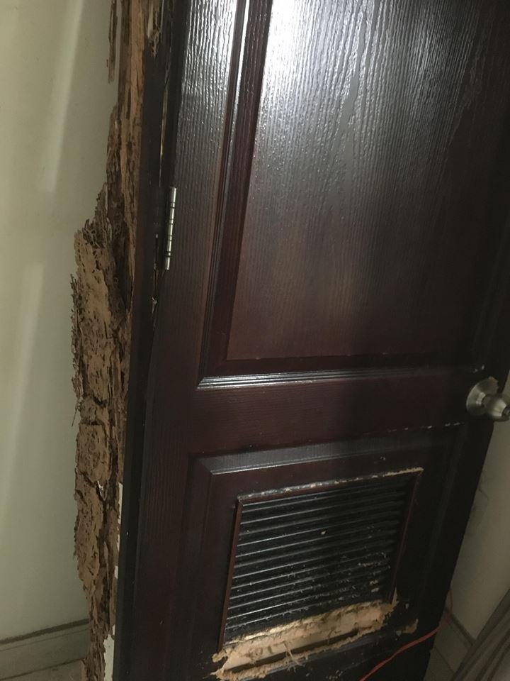 cửa bị mối ăn