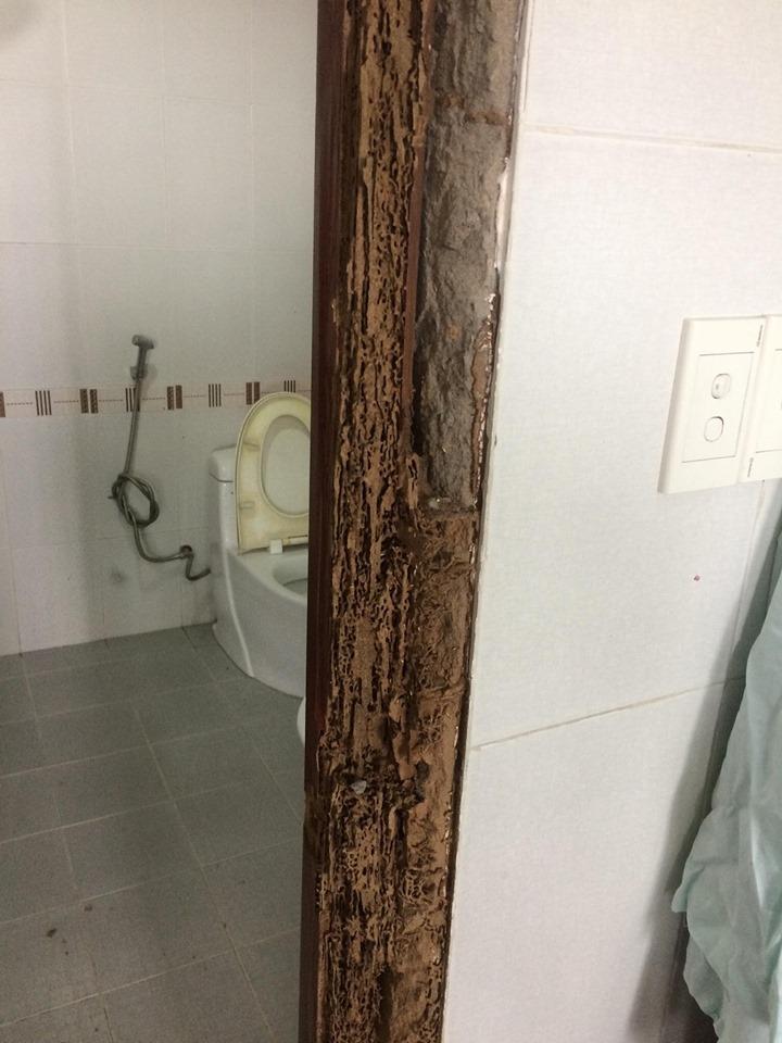 sửa cửa gỗ bị mối ăn tphcm