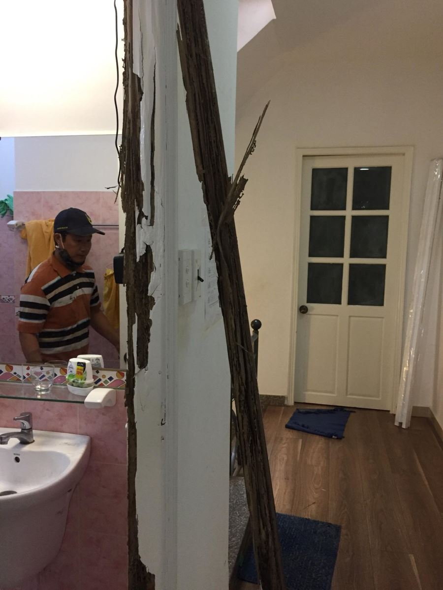 sửa cửa gỗ bị mối mọt tại tphcm